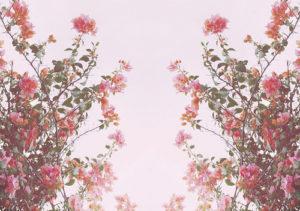 beautiful-flower-bg